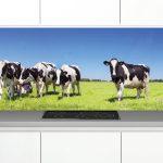 Zambala-keuken-achterwand-Koeien