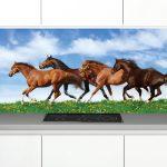 Zambala-lkeuken-achterwand-Paarden